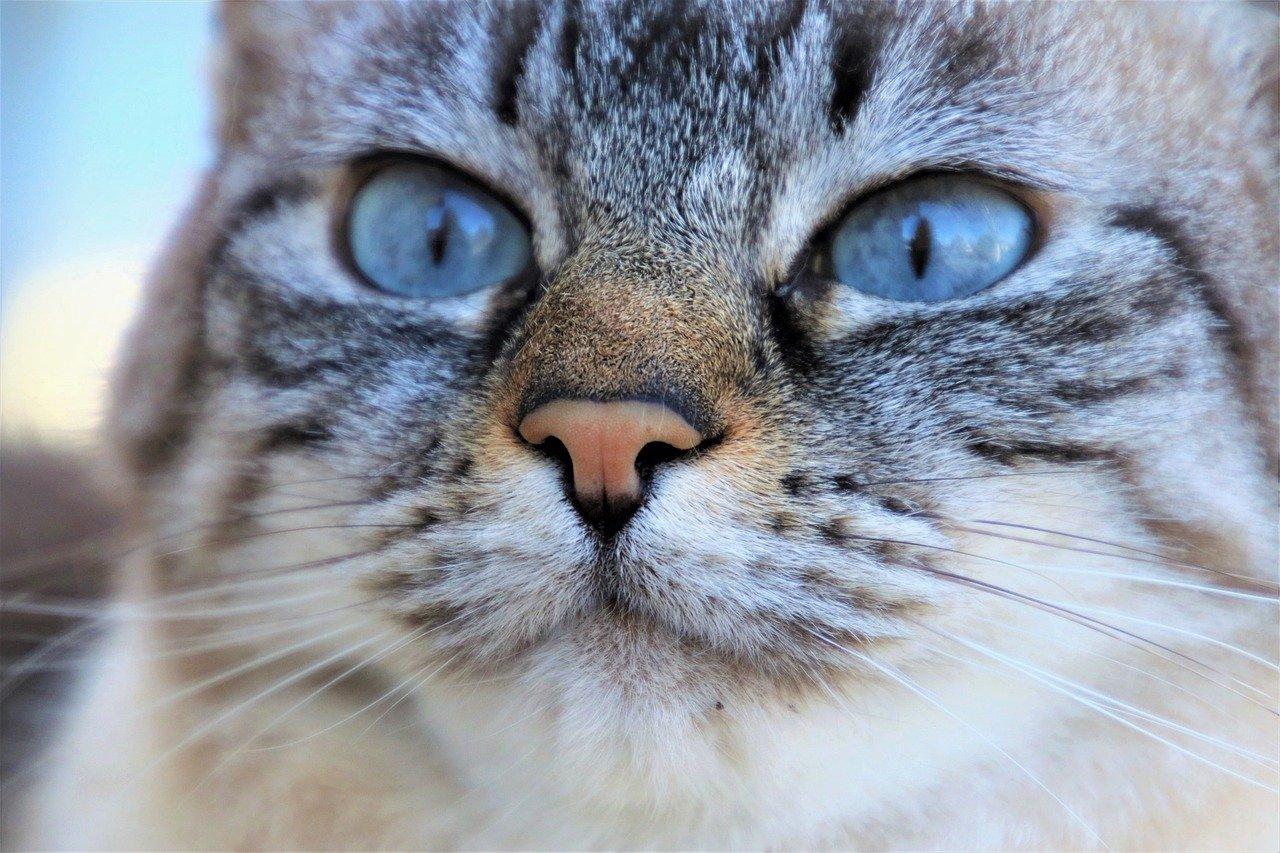 生命 ネコ 保険 の